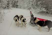 "Snow at ""The Arctic Circle""! See our sled dogs' winter training"